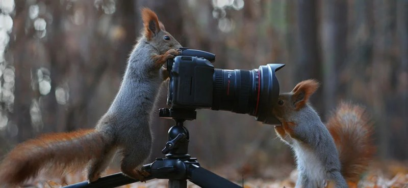 squirrel-photography-russia-vadim-trunov-vinegret-11
