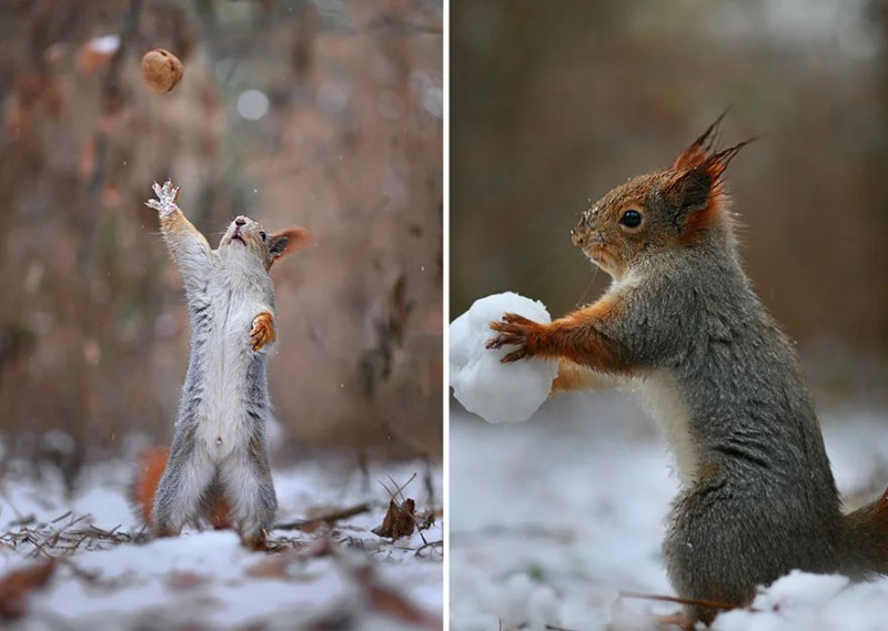 squirrel-photography-russia-vadim-trunov-vinegret-14