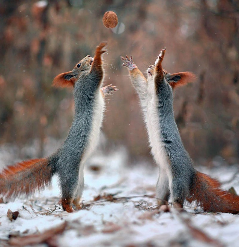 squirrel-photography-russia-vadim-trunov-vinegret-9