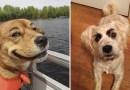 15 смешных фотографий собак с бровями.