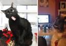 Эти 20 фотографий с ужасно «фотогеничными» животными заставят вас смеяться сильнее обычного.