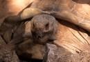 Видео: В Интернете набирает популярность ролик с черепахой, которая говорит «Вау».