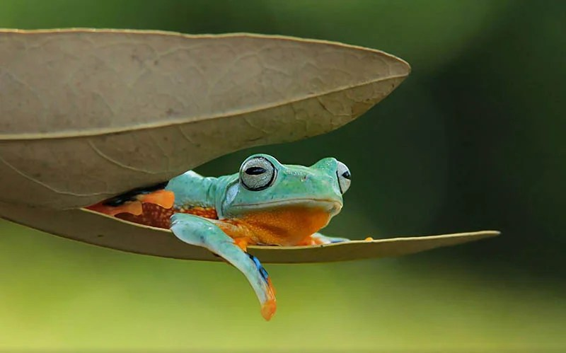 frog-photography-tanto-yensen-vinegret-8