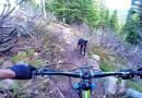 Видео: Парень носится на безумной скорости на горном велосипеде, преследуя своего пса.