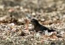 Видео, где ящерица пытается уйти от преследования змеями, просто взорвало Интернет.
