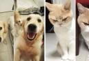 Люди делятся в Сети фотографиями своих животных До и После того, как их назвали «Хороший Мальчик».