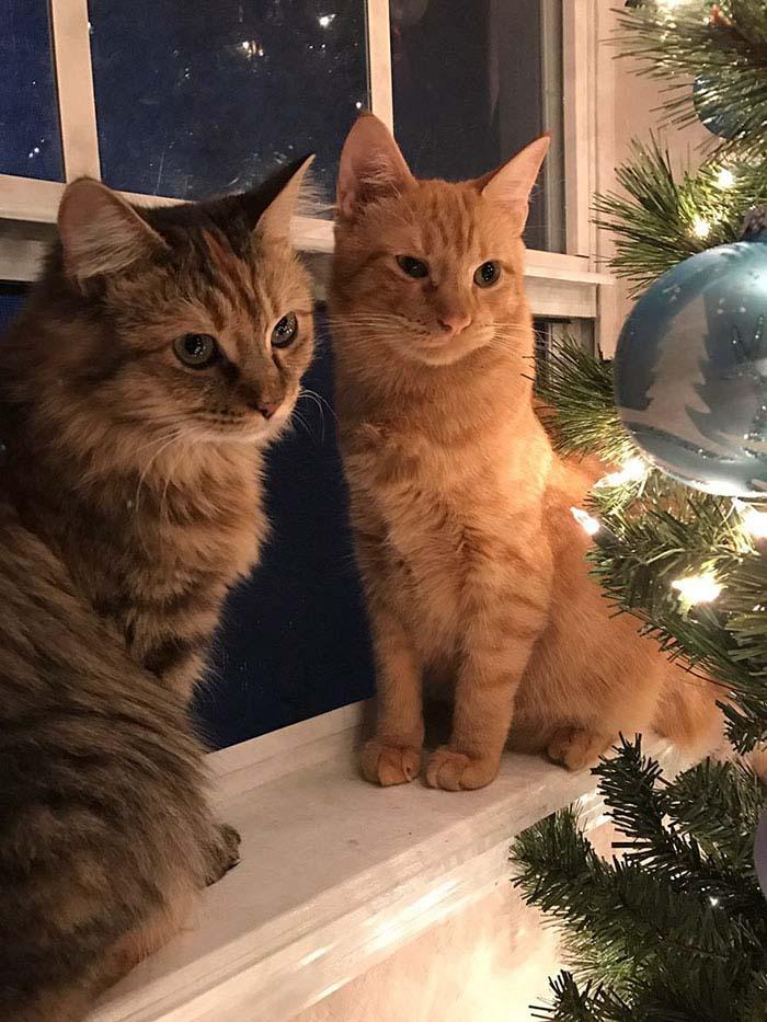 cats-kissing-in-love-louie-luna-vinegret-4