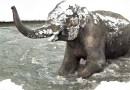Реакция животных Орегонского зоопарка на выпавший снег. [Видео]