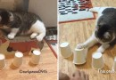 Не может быть, эта кошка —  гений!