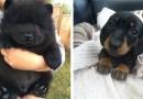 20 потрясающих фотографий с милыми щенятами.