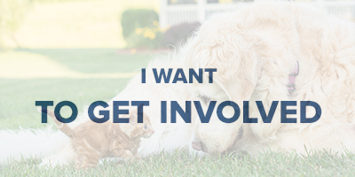 VIN Foundation | Supporting veterinarians to cultivate a healthy animal community | I am | I want to get involved