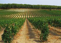 Vinhos da Sicilia – Itália