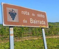 Bairrada – uma região vitivinícola portuguesa