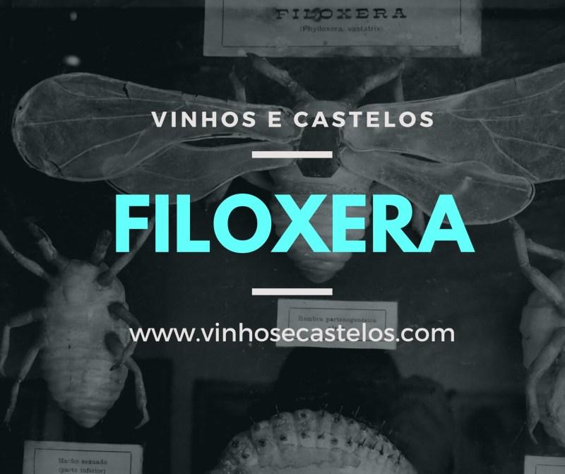 Sabe o que é Filoxera e qual sua relação com o vinho?