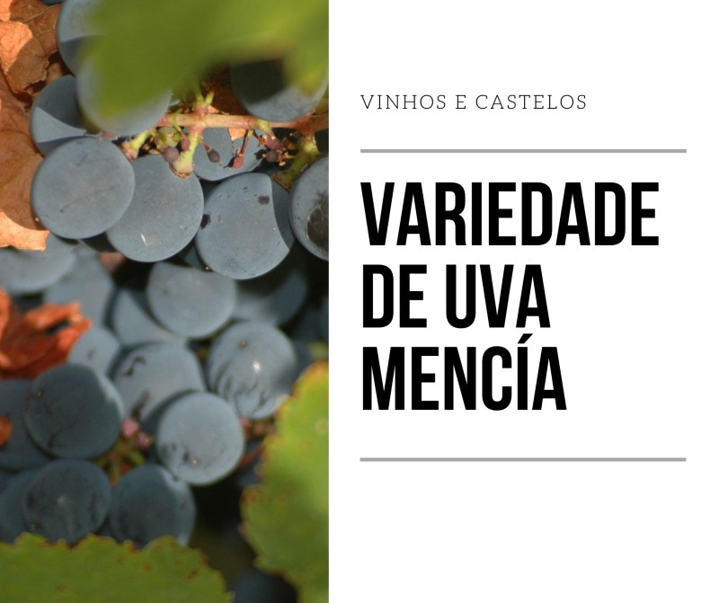 Variedade de uva Mencía