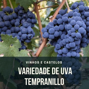 Variedade de uva: Tempranillo