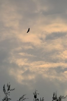 Freedom of Sky