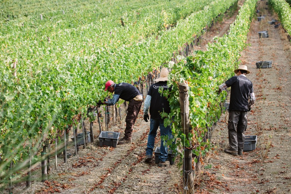 Vineyard workers at Querciabella (pic: ASC Fine Wines)