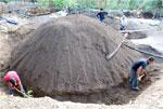 производство мескаля текила агава