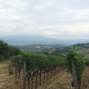 d 300x300 - 6 Reasons to Book a Private Wine Tour with Vinotalia