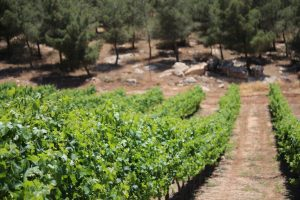 Винодельни Израиля