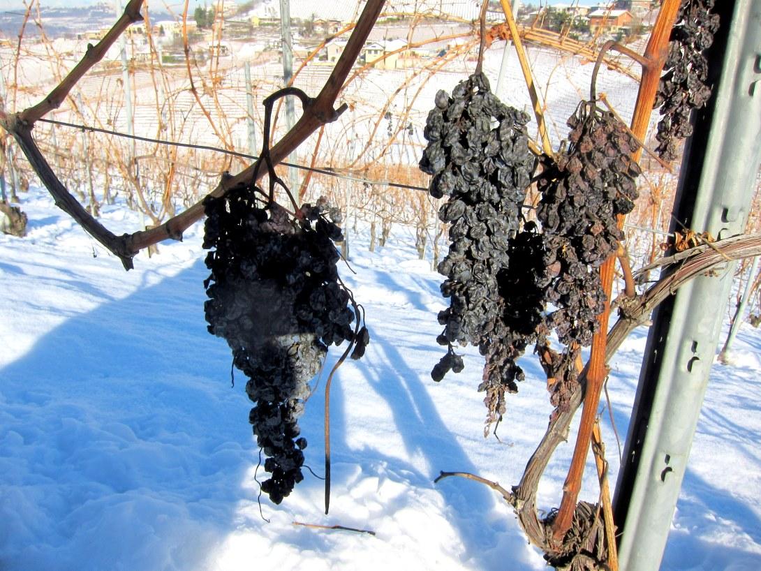 возраст, потенциал выдержки, хранение вина