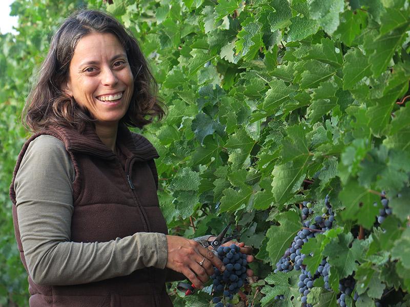 Наама Соркин, винодел Дальтона в течение 12 лет