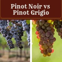 Pinot Noir vs Pinot Grigio - Which Will You Love More?