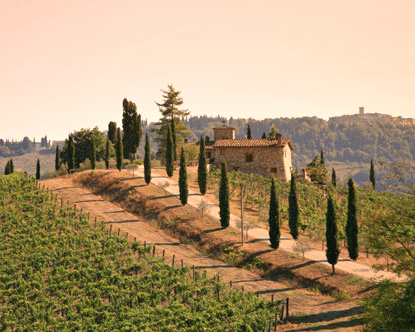Vineyards in the hills of Tuscany, Italy.
