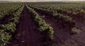 Las condiciones climaticas para el cultivo 2