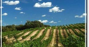 El cuidado y la conservación del vino