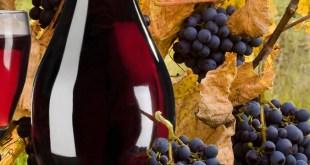Comprar vinos de forma rápida