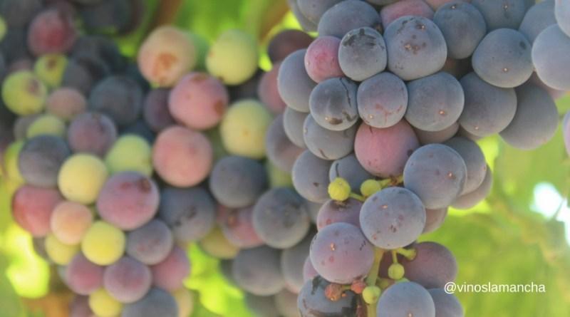 Cómo mitigar efectos cambio climático en el viñedo