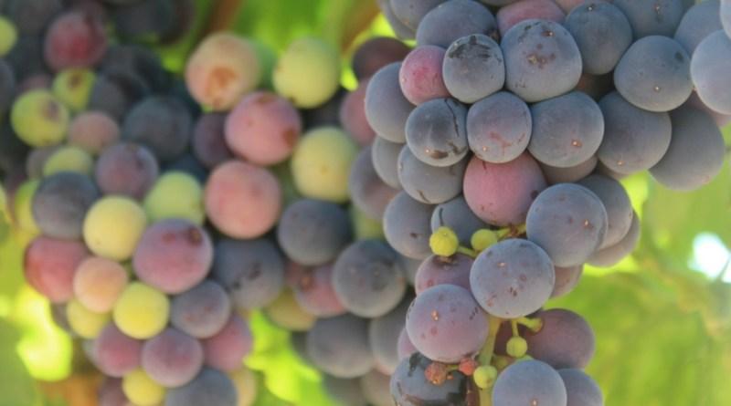 Los supertaninos, los nuevos taninos descubiertos en el vino