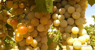 Hablemos del precio de la uva