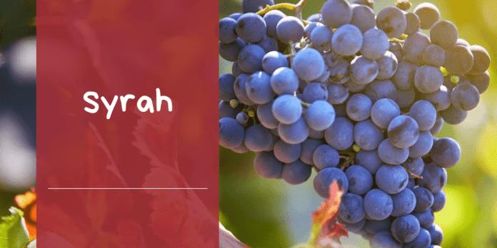 caracteristicas variedad de uva syrah