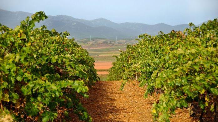 precio viñedo en España hectárea