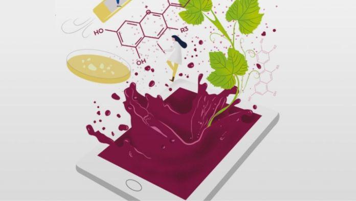 Agenda Estratégica de Innovación del sector del Vino