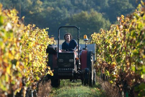 Didier Barré in the field Photo credit: www.sudcomer.com (Berthoumieu website)