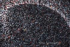 En ocasiones veo uvas