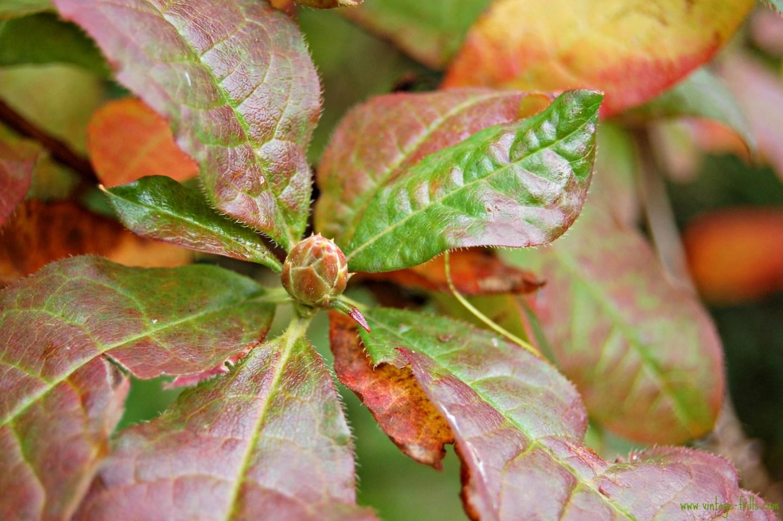 Autumn Colours 7