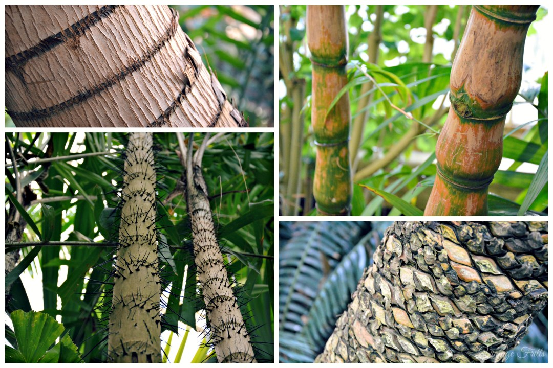 Kew Gardens Bamboo and Trunks Palm House