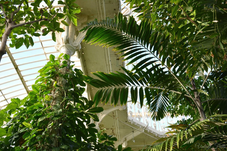 Kew Gardens Palm House Interior