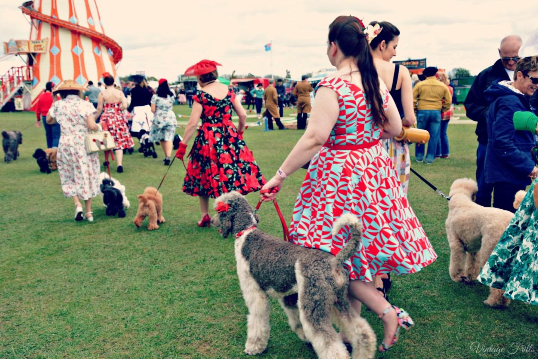 Atomic Festival Poodles