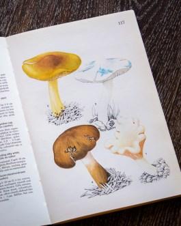 Грибы. Иллюстрация из книги 1979 года. Артикул: mat030