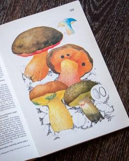 Грибы. Иллюстрация из книги 1979 года. Артикул: mat066