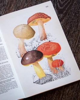 Боровик. Иллюстрация из книги 1979 года. Артикул: mat067