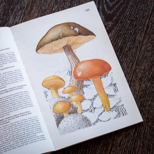 Обабок. Иллюстрация из книги 1979 года. Артикул: mat068