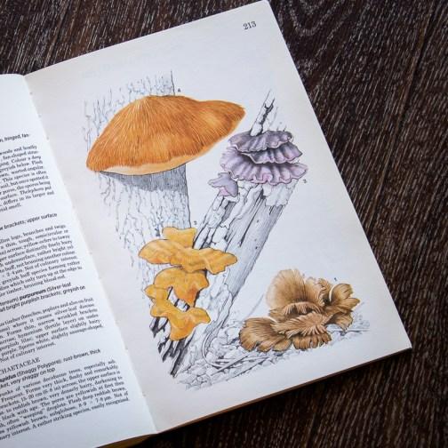 Грибы. Иллюстрация из книги 1979 года. Артикул: mat078