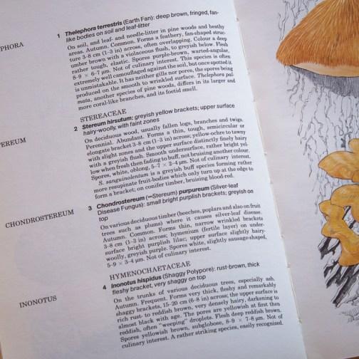 Ботаническая иллюстрация из книги 1979 года. Артикул: mat078
